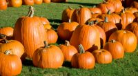On Tuesday, October 30th our garden will be transformed into a pumpkin patch by CUPE 23 and Intentional Acts of Kindness who have donated 500 pumpkins, popcorn and juice for […]